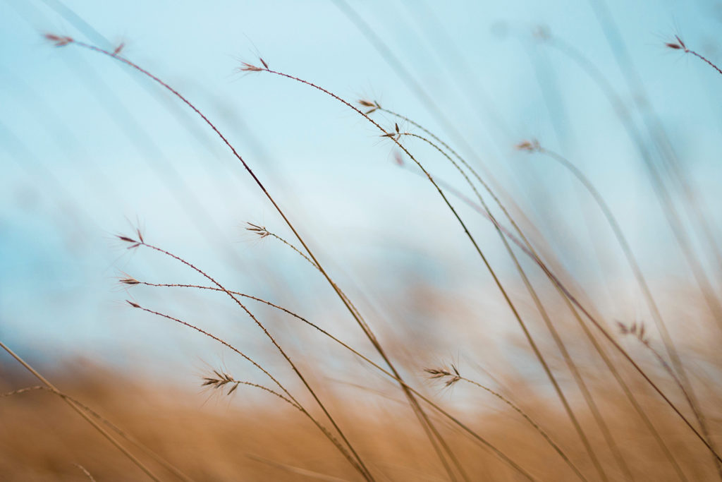 Brown grass with blue sky background